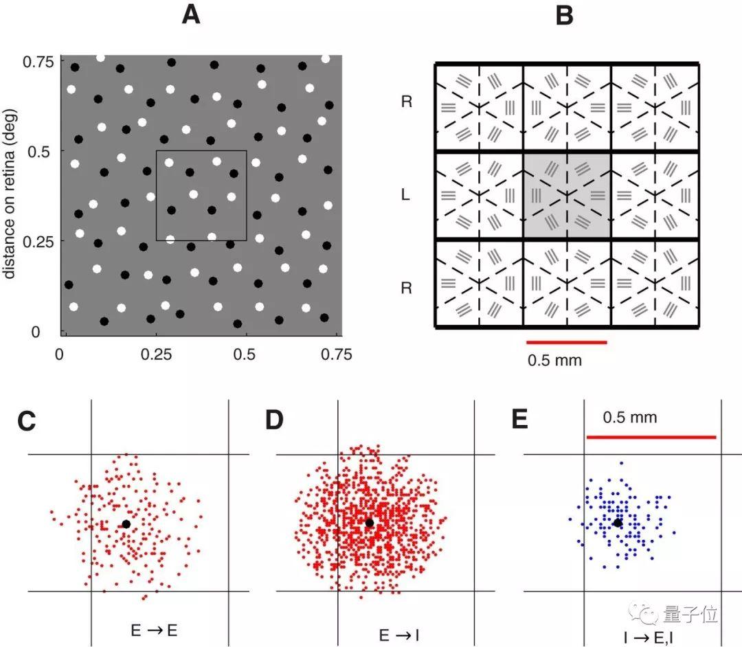 华人数学家解开视觉奥秘:一切都是大脑假装让人看见